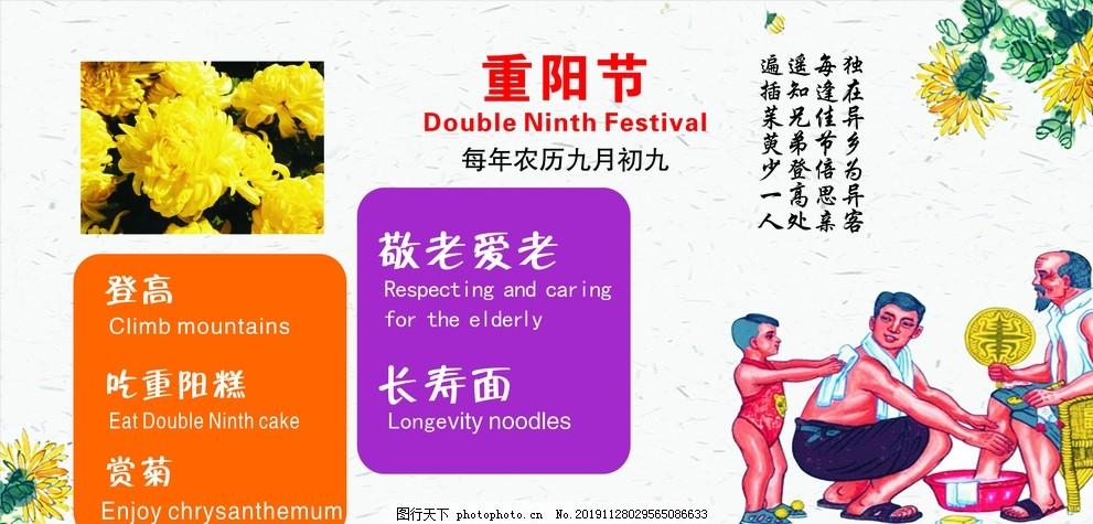 重阳节,传统节日,二十四节气,中国传统节日,校园展板,校园文化,菊花